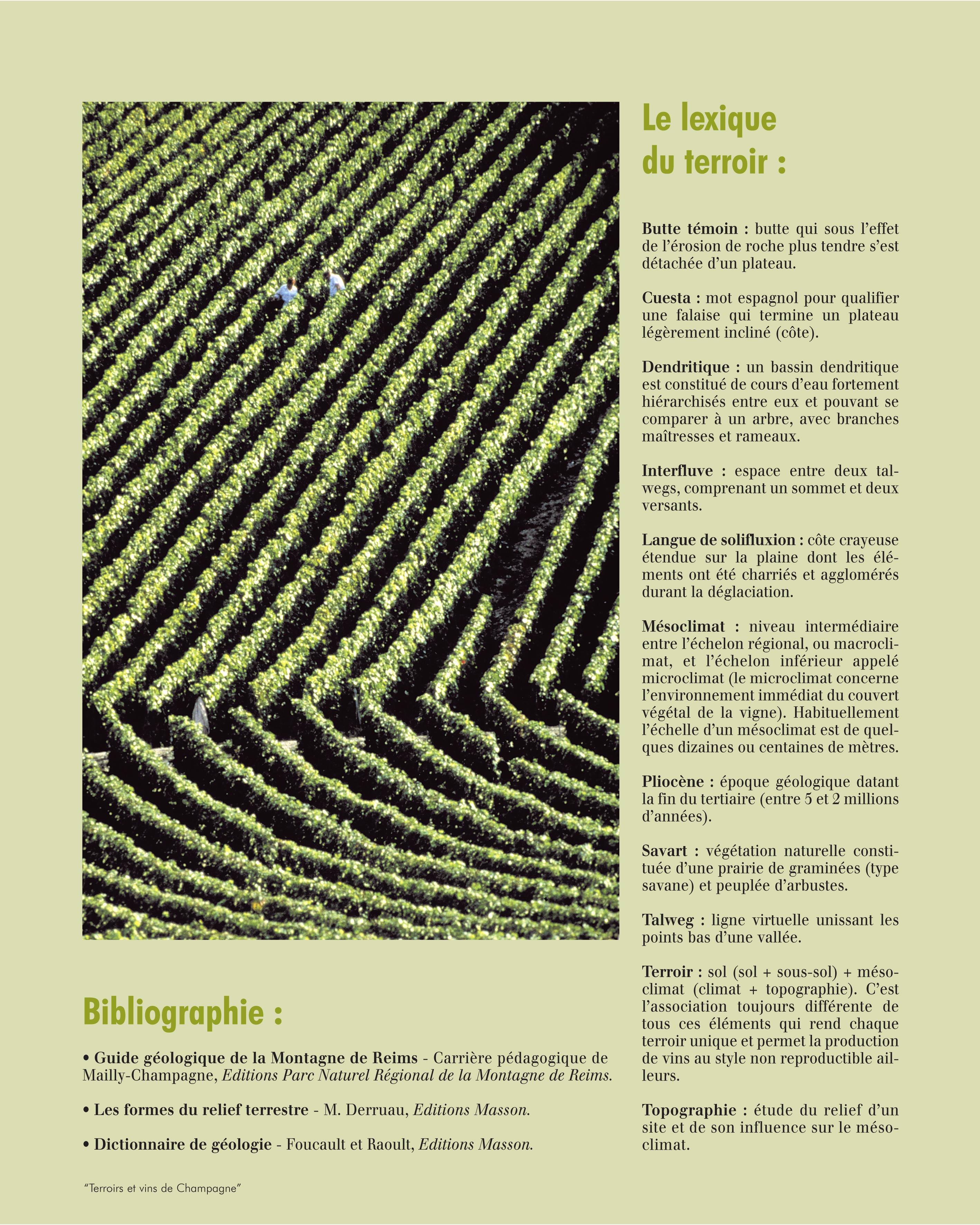Champagne - Le bois sans modération